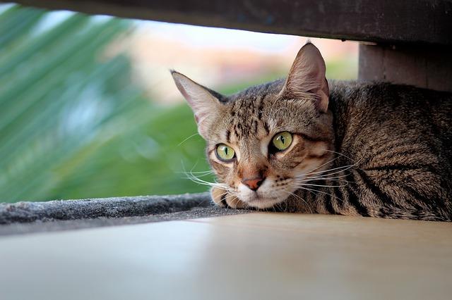 macska opció pénzt keresni bináris opciókkal hétvégén