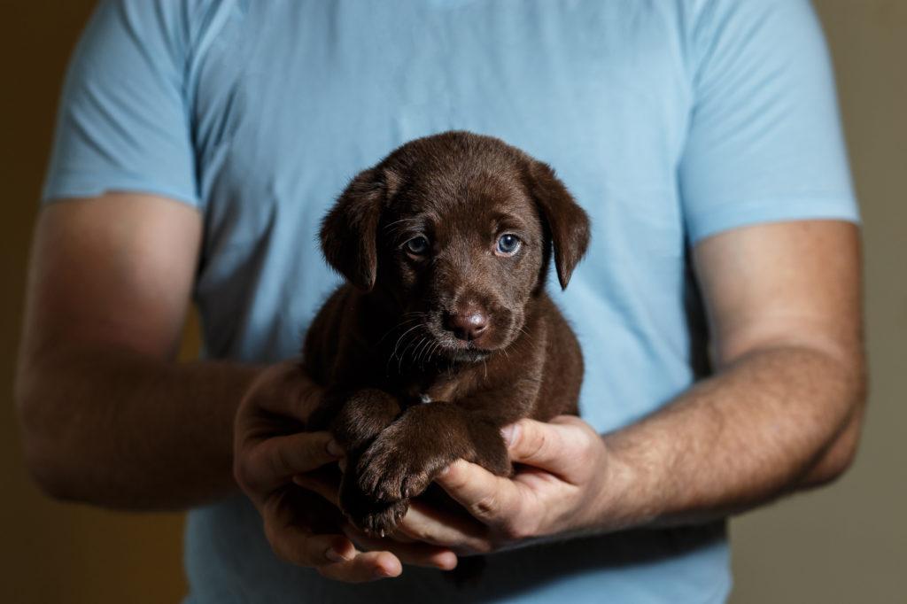 lehet-e pénzt keresni kutyák nevelésével?