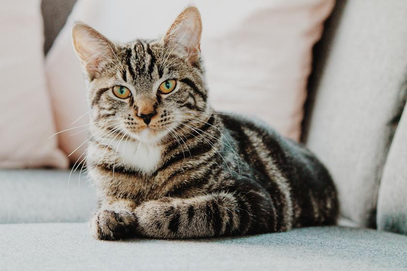 macska, hogyan lehet sok pénzt keresni