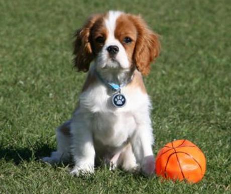 lehet-e pénzt keresni kutyák nevelésével?)