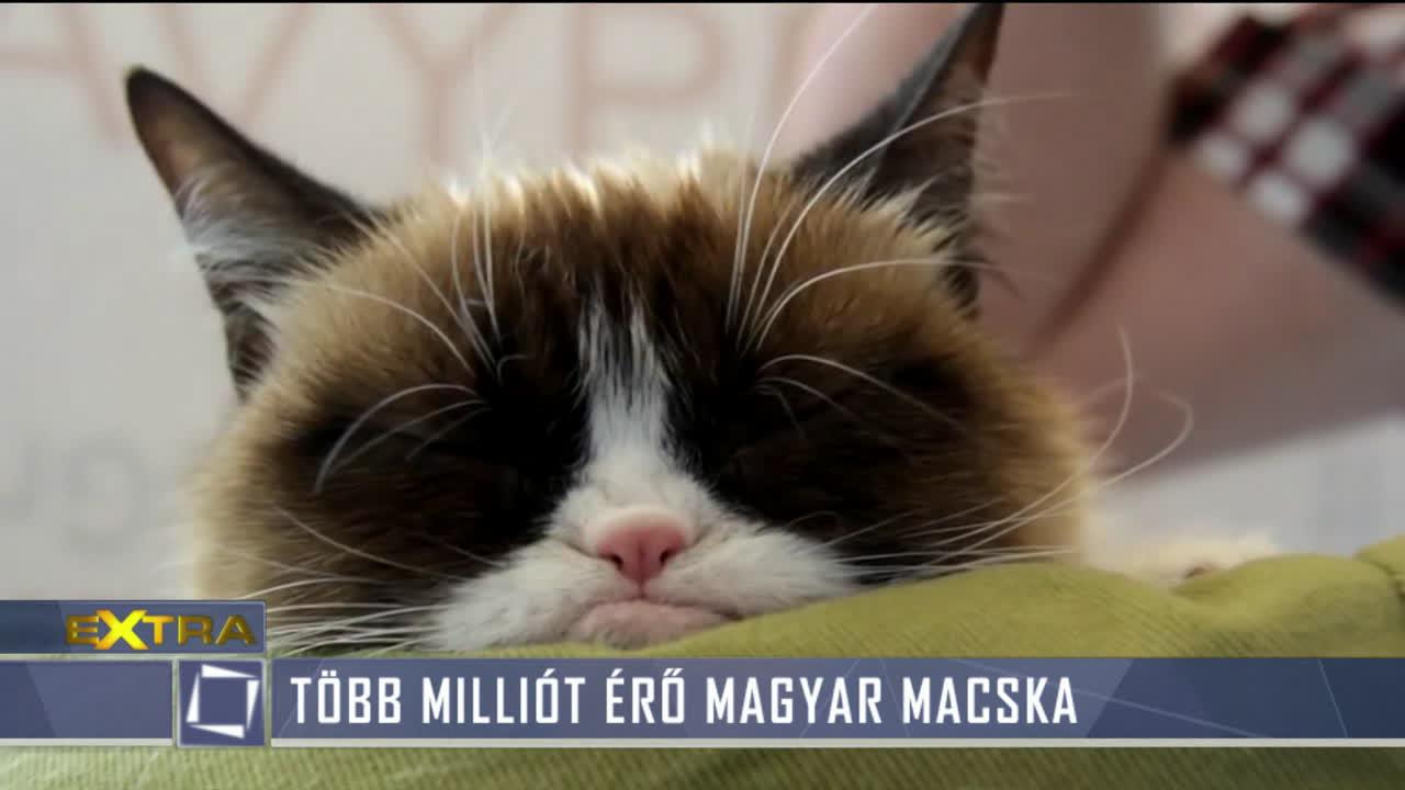 macska, hogyan lehet sok pénzt keresni)