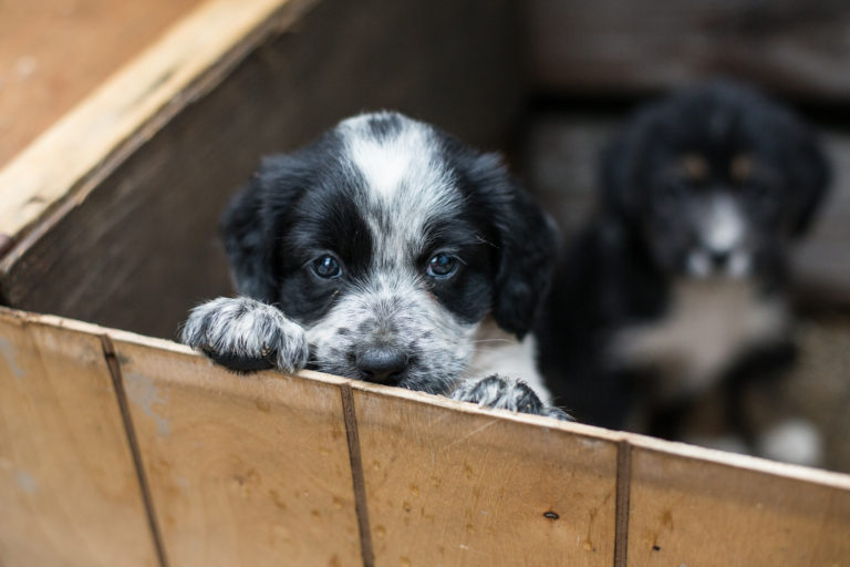 lehet-e pénzt keresni kutyák nevelésével? mit és hol könnyebb pénzt keresni